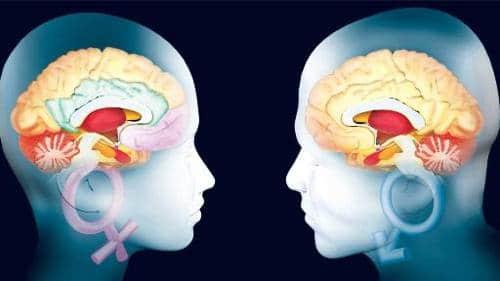 mozg zhenshchiny i muzhchiny