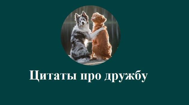 Photo of Цитаты про дружбу для лучших друзей